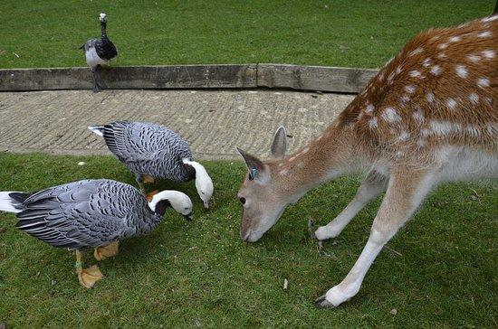 Prinknash Bird And Deer Park