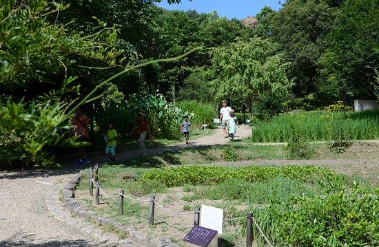 Manyo Botanical Garden (Nara, Japan): Top Tips Before You Go - TripAdvisor