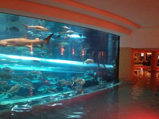 Golden Nugget Hotel: photo2.jpg