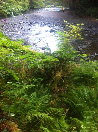 Barnes Creek