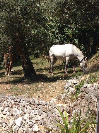 Venafro, Italia: Svegliarti la mattina ed ammirare queste bellezze non ha prezzo. La natura e gli animali di Casc