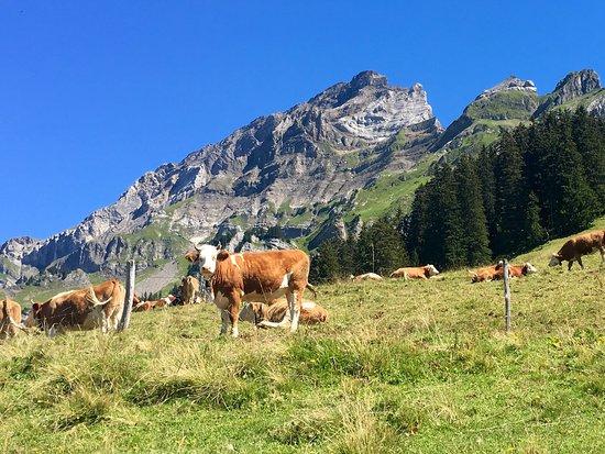 Gryon, سويسرا: photo1.jpg