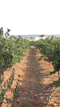 Neve Shalom, Israël : photo4.jpg