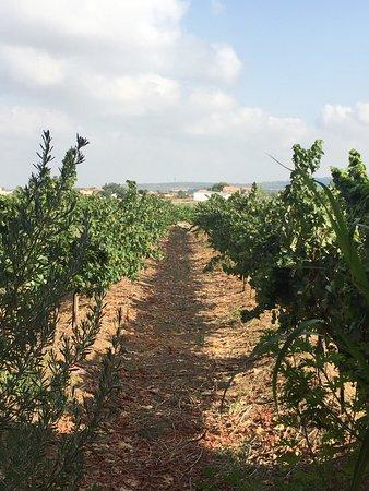 Neve Shalom, Israël : photo5.jpg