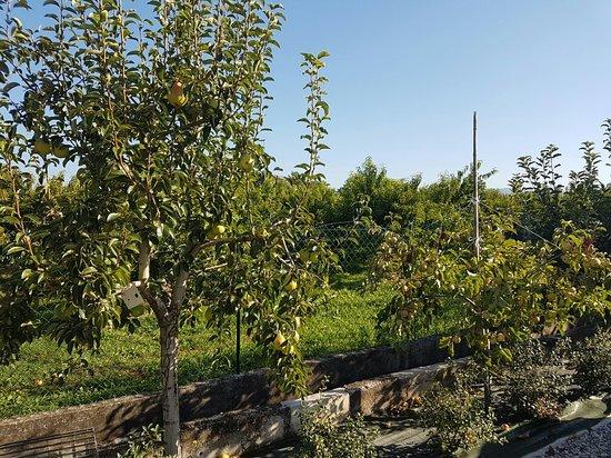 Pescantina, Italie : La Torretta