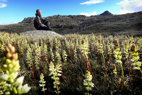 Thredbo Village, Australia: Sitting among the summer mountain flowers in Kosciuszko National Park