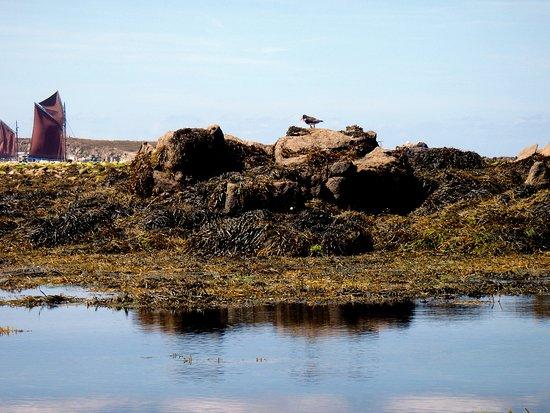 Ile Molene, Fransa: tout près des oiseaux à ledenez