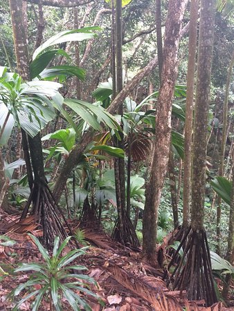 Victoria, Seychellen: photo1.jpg