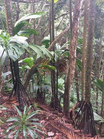 Victoria, Seychellerna: photo1.jpg