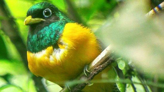 Drake Bay, Costa Rica: IMG_20160826_112928_HDR_1472260648424_large.jpg