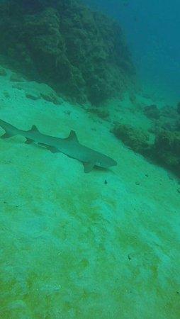 Drake Bay, Costa Rica: IMG-20160825-WA0032_large.jpg