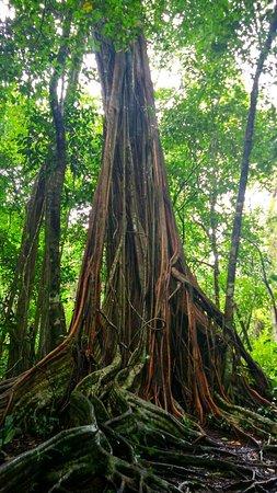 Drake Bay, Costa Rica: IMG_20160826_090436_HDR_large.jpg