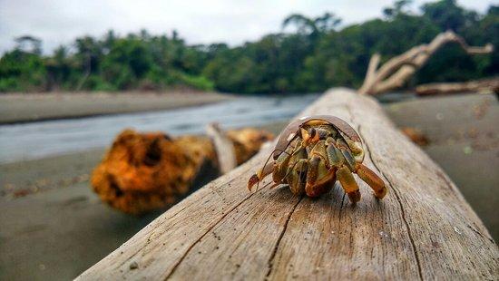 Drake Bay, Costa Rica: IMG_20160826_120257_HDR_large.jpg