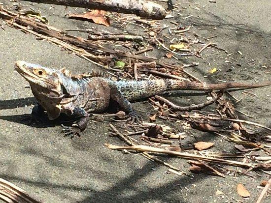 Drake Bay, Kostaryka: IMG-20160826-WA0052_large.jpg