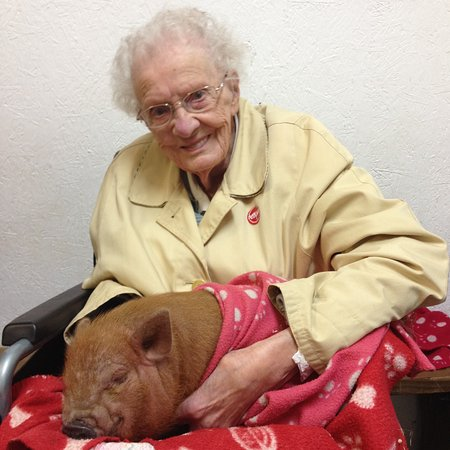 Buckfastleigh, UK: My 99 and a half year old grandmother hugging a micro pig!