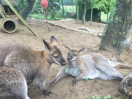 Zoologico El Bosque