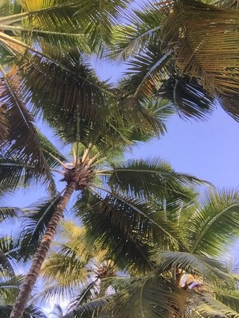 Bayahíbe, República Dominicana: photo2.jpg