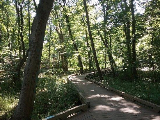 Ann Arbor, MI: Walking Path - Wetlands