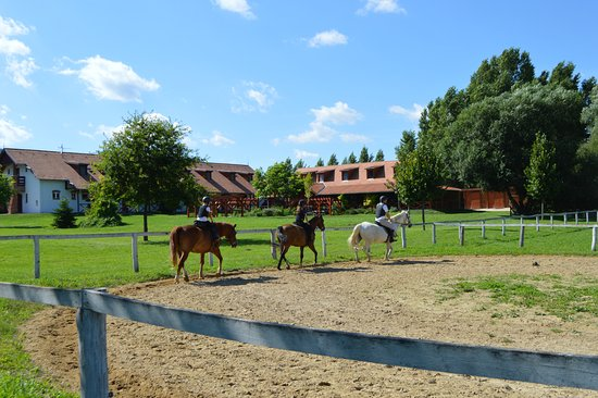 Equital Horse Farm and Wellness Pension: Horse-riding at Equital