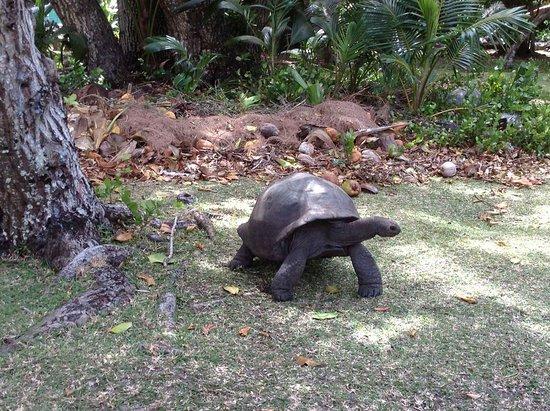 Au Cap, Seychellen: Hotel L'Archipel