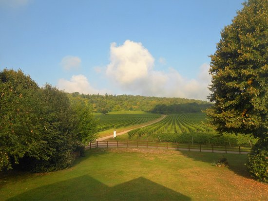Dorking, UK: The View Over THe Vineyard