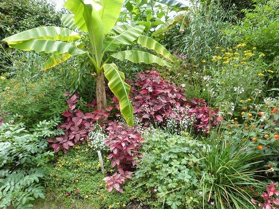 Combrit, Francia: Bananier et à son pied plantes colorées
