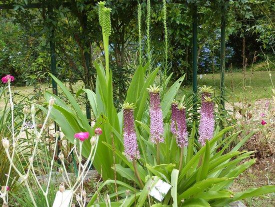 Combrit, Francia: De bien d'étranges fleurs