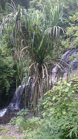 Durian Perangin Waterfall: DSC_0322_3_large.jpg