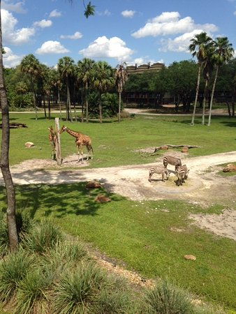 Disney's Animal Kingdom Villas - Kidani Village: Vista da varanda do quarto!