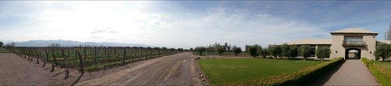 Lujan de Cuyo, Argentina: DSC_0259_large.jpg