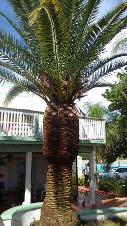 Banana Bay Waterfront Motel: FB_IMG_1472241124129_large.jpg