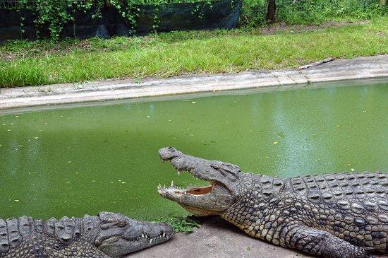 St Lucia, Südafrika: Crocs