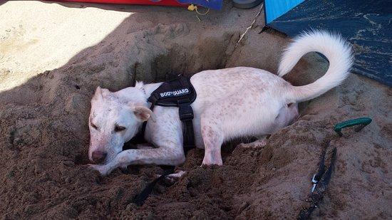 Chicco in spiaggia .dentro il buco scavato da lui!! foto di