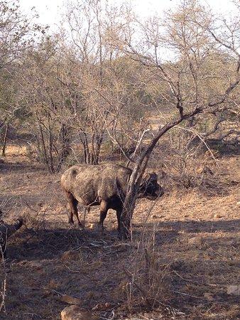 Hoedspruit, Sudáfrica: Tambuzi Safaris