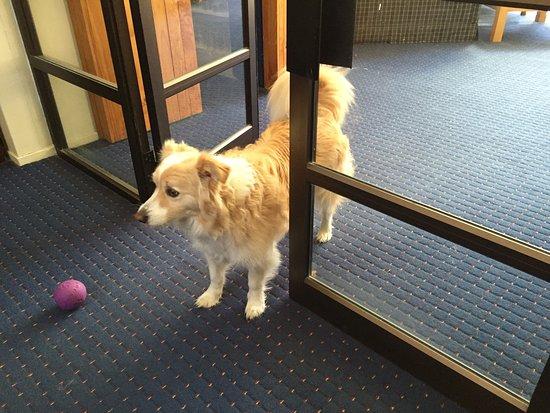 Tussock Grove Boutique Hotel: 宿の愛犬、ブラウディちゃん。とても可愛い。