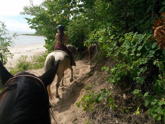 Jordan Station, Canada: Horse Play