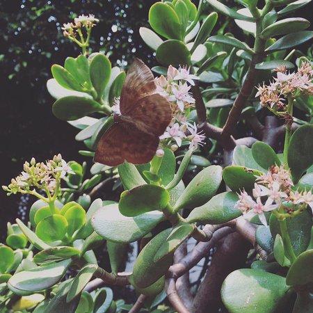 Hostal Cuija Coyoacan: Mágico lugar!!!! Gracias por todo!