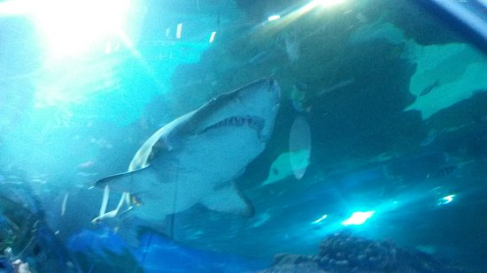 Blue Planet Aquarium: 20160811_132232_large.jpg