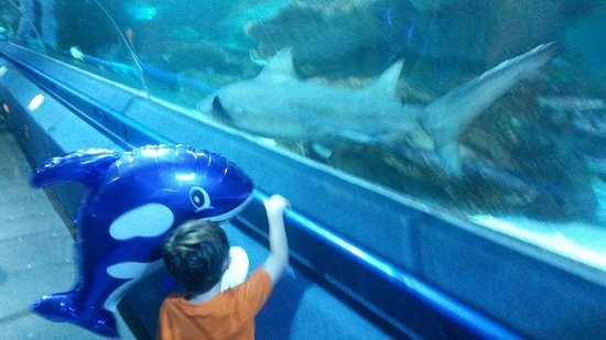 Blue Planet Aquarium: 20160811_154050_large.jpg