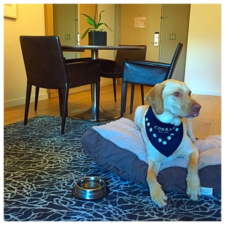 Conrad new york updated 2018 prices hotel reviews new for New york pet friendly hotels