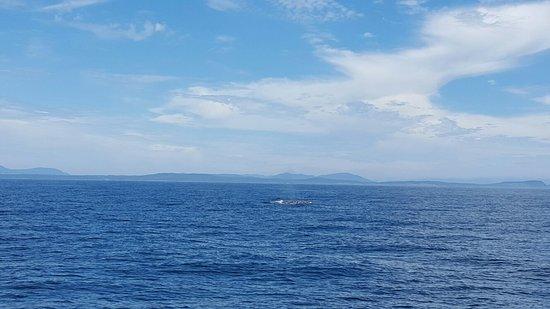 Island Adventures: 20160725_115929_002_large.jpg