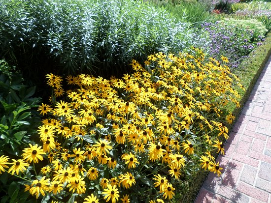 Flint, MI : the perennial garden near the home