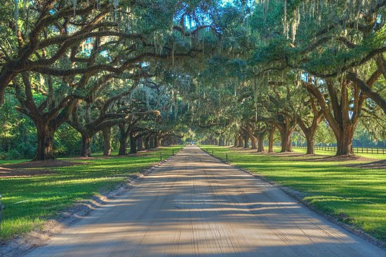 Mount Pleasant, Güney Carolina: Feels like a dream driving into Boone Hall through their row of Spanish Moss covered Oak Trees.