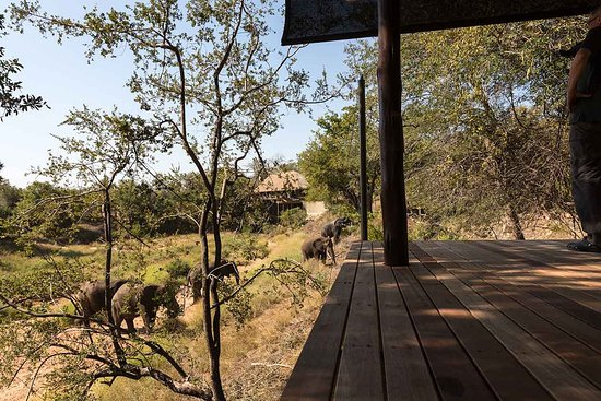 Garonga Safari Camp: When the elephants came to visit us in our room!