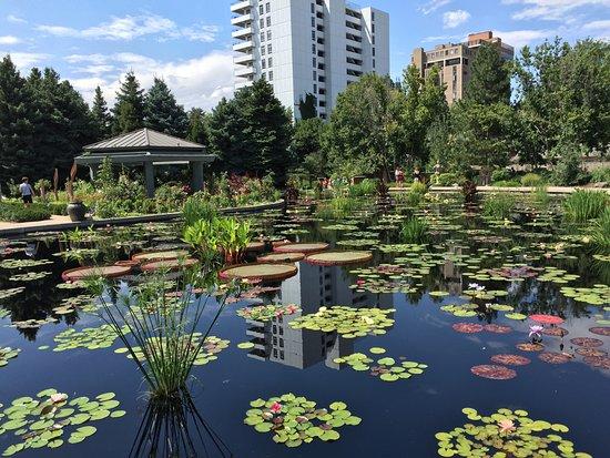 Denver Botanic Gardens: Monet Pool   In Context (Denver)