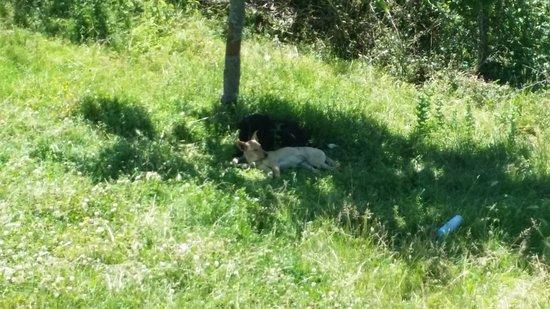 Provincia de Álava, España: estoy en la montaña con mis perras