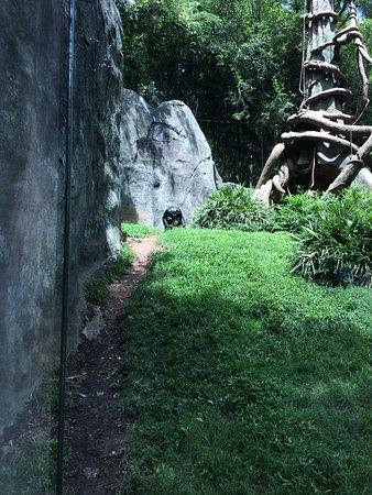 Asheboro, Северная Каролина: Baby gorilla