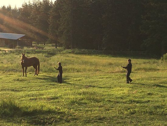 Wilson, Вайоминг: Morning on the ranch...feeding the horses!