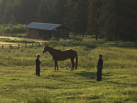 Wilson, Wyoming: Morning on the ranch...feeding the horses!