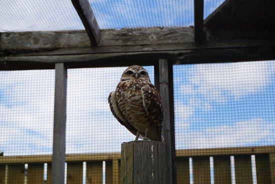 Burrowing Owl Interpretive Centre: Owls were super cute :)
